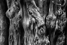 NATURE : Wood