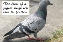 Fun Fact Friday! / Fun garden and wildlife facts that we like to give you on a Friday to take you into the weekend