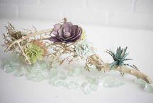 Eco Flower Goes Coastal