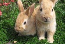 Bunny breeds