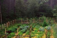 Garden - Kitchen, herb and fruit garden