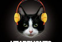 Feline Funk / by LUXE Paws