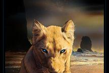 ♥Lion / Leo, lion...Муррр муяу =)