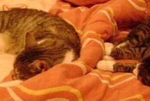 kazis / eindeutig cat-content :)