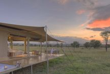 Safari Honeymoons at Bushtops / Whether you tie the knot on site or join us after your wedding, we're convinced that Mara Bushtops is the perfect destination from which to start the biggest adventure of your life!  All our guests enjoy Wild Luxury, but we make sure you receive extra-special attention. As a newly married couple, we treat you like royalty, assigning you to our specially-appointed honeymooner tent, where a bottle of bubbly awaits you. A private bush breakfast adds another memorable moment. / by Bushtops Camps