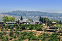 Kibbutzim- stayed there