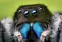 Bugs / All things cool, creepy and crawly. / by discoveryplace