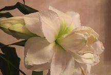 kukkat / Kukkia