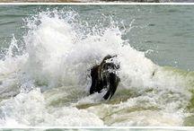 Elephant at the sea