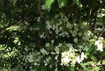 Love from my garden