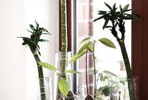 観葉植物達