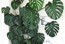 Plantas ornamentales / Son de colores vistosos