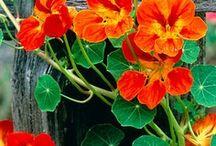 kytky u plotu