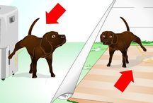 dog training ect.