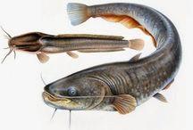 Teknik Jitu Mancing Ikan Mania