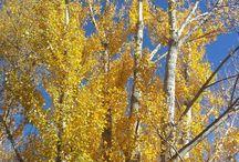 Autumnal Season