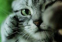 Cute Kittens / Cute Kittens