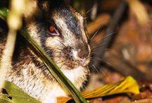 Indonesia Fauna