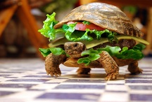 Insolite & Food