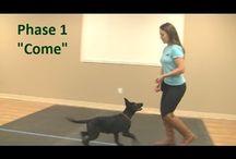 Dog Training Videos / Dog training
