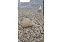 Beaches Seashells Sunshine / Beaches Seashells Sunshine and Nature By The Sea
