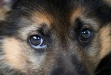 oczy i oczka / labradorek