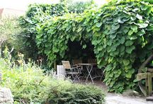 Kommende planter til haven