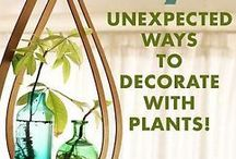 Decorate / Feel Good / Decoration ideas and feel-good items (flowers, etc). Come see!