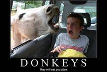 Funnies!! / by Jennifer Stich