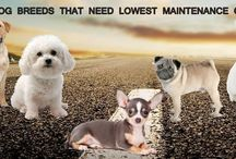 Low maintenance Dogs / Get best information about top Low maintenance Dogs breeds.