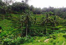 Bali / Traveling / backpacking in Bali Indonesia Ubud Canggu