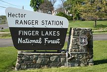 Finger Lakes National Forest / The Finger Lakes National Forest is 16,212 acres of upland forest, pasture, and scrub traversed by gorges, ravines, and more than 30 mi. of trails for hiking, biking,  cross-country skiing, and horseback riding. This land spreads out in a number of parcels over Seneca and Schuyler counties in the Finger Lakes region of upstate New York, USA. For more information about the FLNF, see http://ilovethefingerlakes.com/recreation/nationalforest.htm.