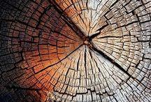 Alberi tronchi