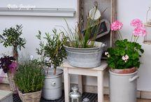 Garten/ Pflanzen