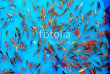 Fotolia / Best Testure form Fotolia