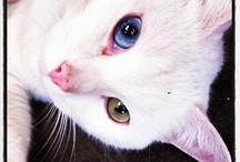 Kilo / Adopted Nursery #cat.