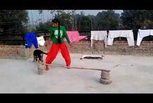 German Shepherd Dog Training in Hindi