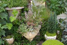 Container gardening Brissie