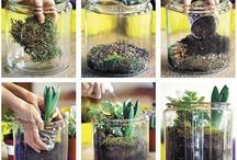 Plants / by Nathalie Karakko