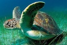 Sea Turtles / by Beach Vacation Rentals