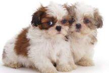 My dream puppies