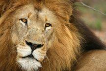 Phinda Private Game Reserve, KwaZulu-Natal
