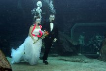Wedding theme: Underwater