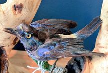 TAKARA taxidermy / Taxidermy sold and sourced for clients by TAKARA