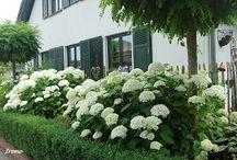 ogród przy ogrodzeniu
