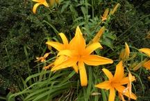Gardening / Plants...garden ideas...