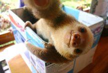 Sloths / SLOTHS ! Need I say more ?