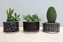 Cactus ▲