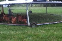 chicken coup