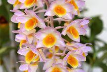 Flowers - Blumen - Fleurs - Fiore